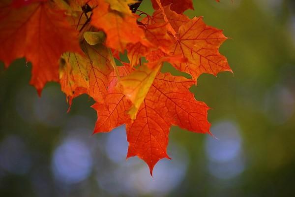 autumn-2726242_960_720